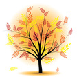 beautiful autumn tree vector image vector image