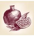 fruit pomegranate hand drawn llustration vector image vector image