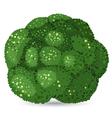 broccoli vector image