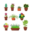 House plants and flowers for interior decoration vector image
