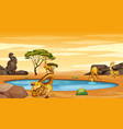 scene with giraffes pond vector image vector image
