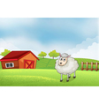 A sheep in the farm with barn and wooden fence at vector image vector image