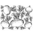 hand drawn of purple turnip on white background vector image