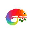 colorful chameleon logo design vector image vector image