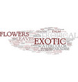 exotic word cloud concept vector image vector image