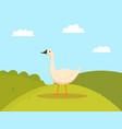 farm bird on grass goose eating farming vector image vector image