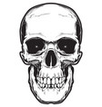 the image of the skull vector image vector image