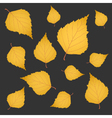 Autumn background of yellow gold birch leaves vector image vector image
