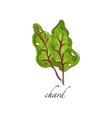 chard fresh culinary plant green seasoning vector image vector image