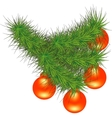New Year branch of pine vector image vector image