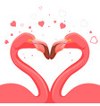 pink flamingo kissing love birds vector image