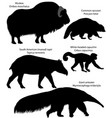 silhouettes of animals of america vector image