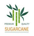 sugarcane plant production natural organic sugar vector image