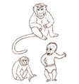 monkeys on a white background vector image
