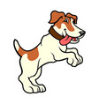 jack russell dog character standing on hind legs vector image