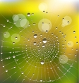 water drops on a spider web vector image vector image