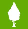cypress icon green vector image vector image