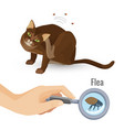 flea from cat fur harmful bio organism vector image vector image