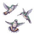 flying humming birds sketch vector image vector image