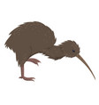 kiwi bird isolated on a white background vector image vector image