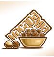 logo for macadamia nut vector image