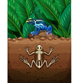 Frog on the ground and fosil underground vector image vector image
