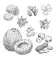 nuts grain and seeds sketch icons vector image vector image