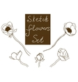 Flower set detailed hand drawn anemones vector image