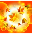 Autumn autumnal background beautiful beauty botany vector image