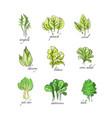 fresh herbs set arugula spinach sorrel chicory vector image
