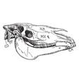 horse skull vintage vector image vector image
