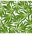 marigold leaves - tagetes on white background vector image vector image