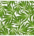 marigold leaves - tagetes on white background vector image