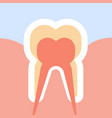 healthy human tooth in cut nerves endings vector image vector image