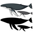 humpback whale characters and its silhouette on vector image
