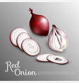natural red onion concept vector image