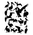 pelican animal detail silhouette vector image vector image