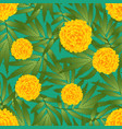 marigold flower - tagetes on green background vector image