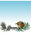 postcard with bullfinch on the fir tree vector image vector image