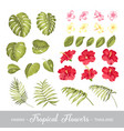 set of tropical flowers elements collection of vector image vector image