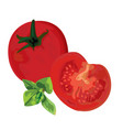 tomatoes and brunch of mint vector image vector image