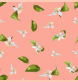 citrus seamless pattern with leaves and flowers vector image