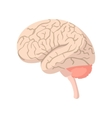 Human brain cartoon icon vector image vector image