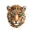 portrait of a leopard head from a splash of vector image