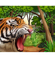 Tiger roaring in the jungle vector image