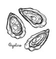 oysters ink sketch vector image vector image