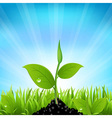Beams And Grass vector image vector image