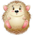 cute baby hedgehog vector image