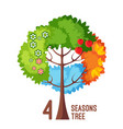 four seasons tree isolated on white background vector image vector image