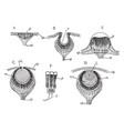 invertebrate simple eye vintage vector image vector image